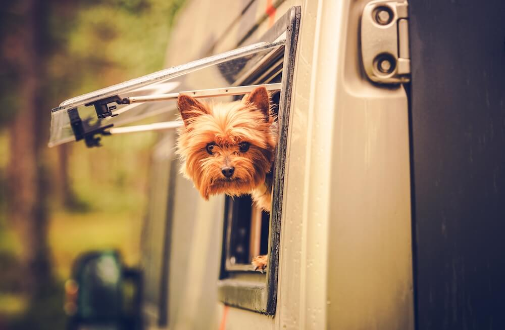 Pamper Your Pet While RVing