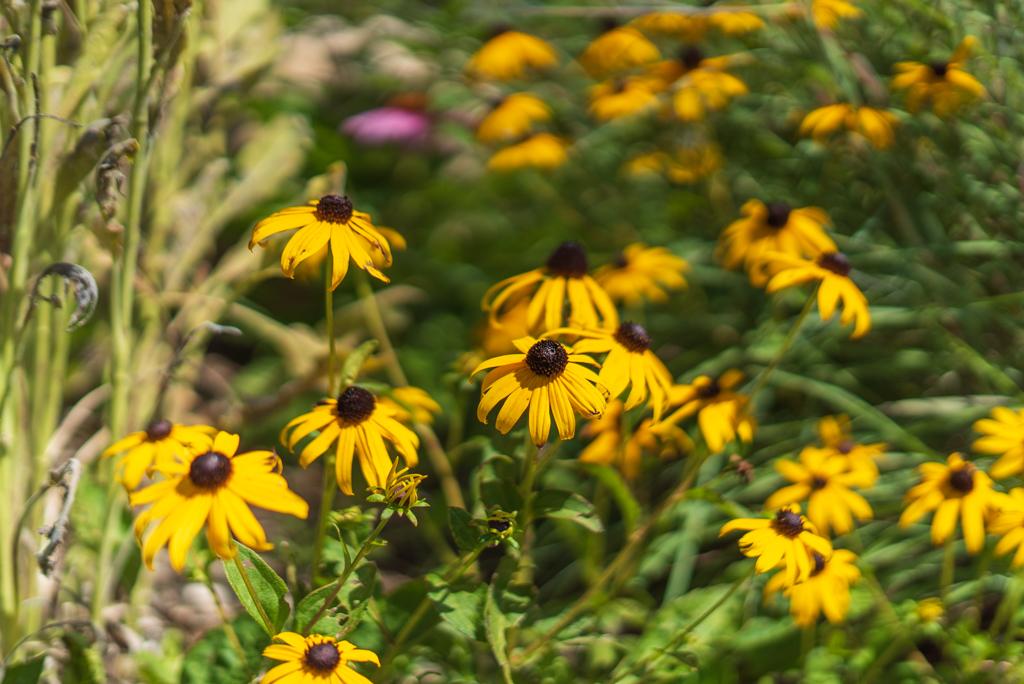 Wildflower Neighborhood MLS-23