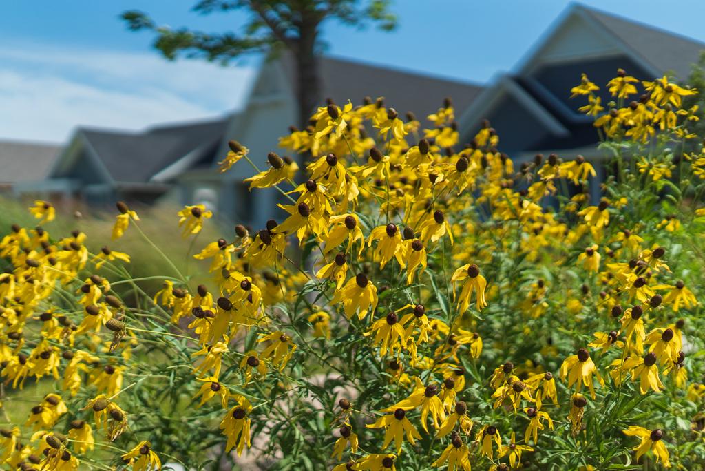 Wildflower Neighborhood MLS-25