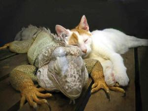 Iguana-and-Cat-1