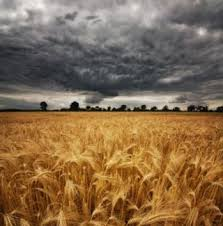 Storm Clouds Gathering over Agriculture