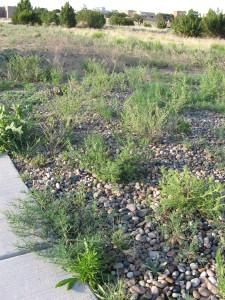 Where the Tumbleweeds Grow