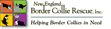 New England Border Collie Rescue