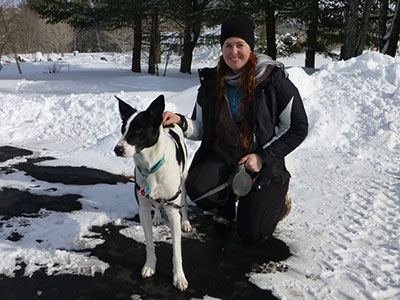Bringing Home Your Rescued Border Collie