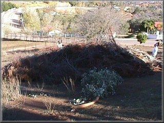 Dead vegetation before