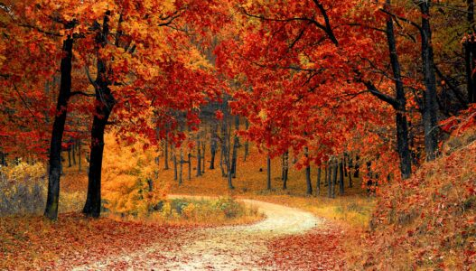 Tips to Stay Strong and Healthy This Fall
