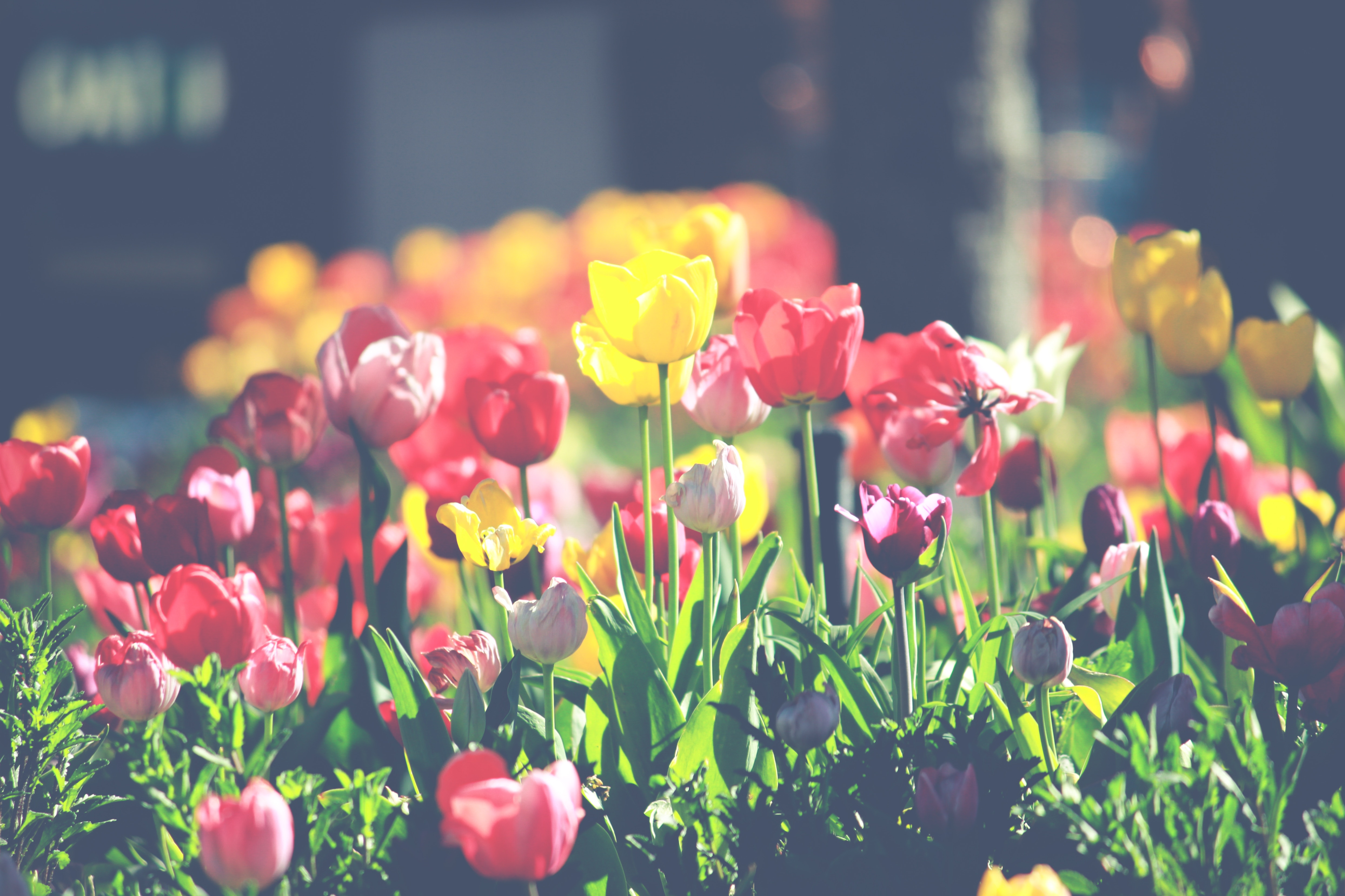 5 Healthy Habits for Spring