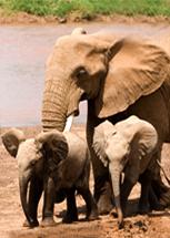 elephant_post