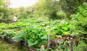 When it comes to growing a garden, going organic is always an excellent option.