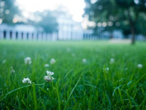 Keep your lawn in tip-top shape.