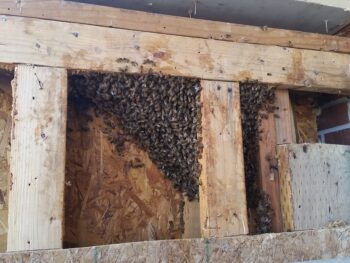 Bee Extraction