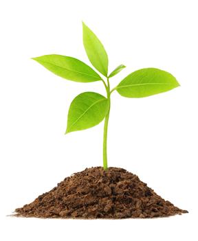 Rainforest Nutrition Additive Free