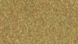 P378 Golden Safari - Arborite