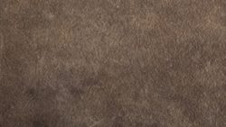 3383 Manaus Brown - Arpa