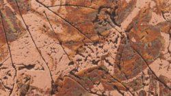 238 Autumn Copper Leaves - Chemetal