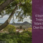 6 Incredible Trees You'll Want In Your Own Backyard