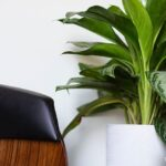 This is Living: Decorating with Houseplants for a Healthy Home