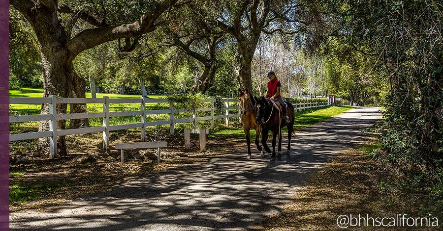 equestrian-homes-for-sale