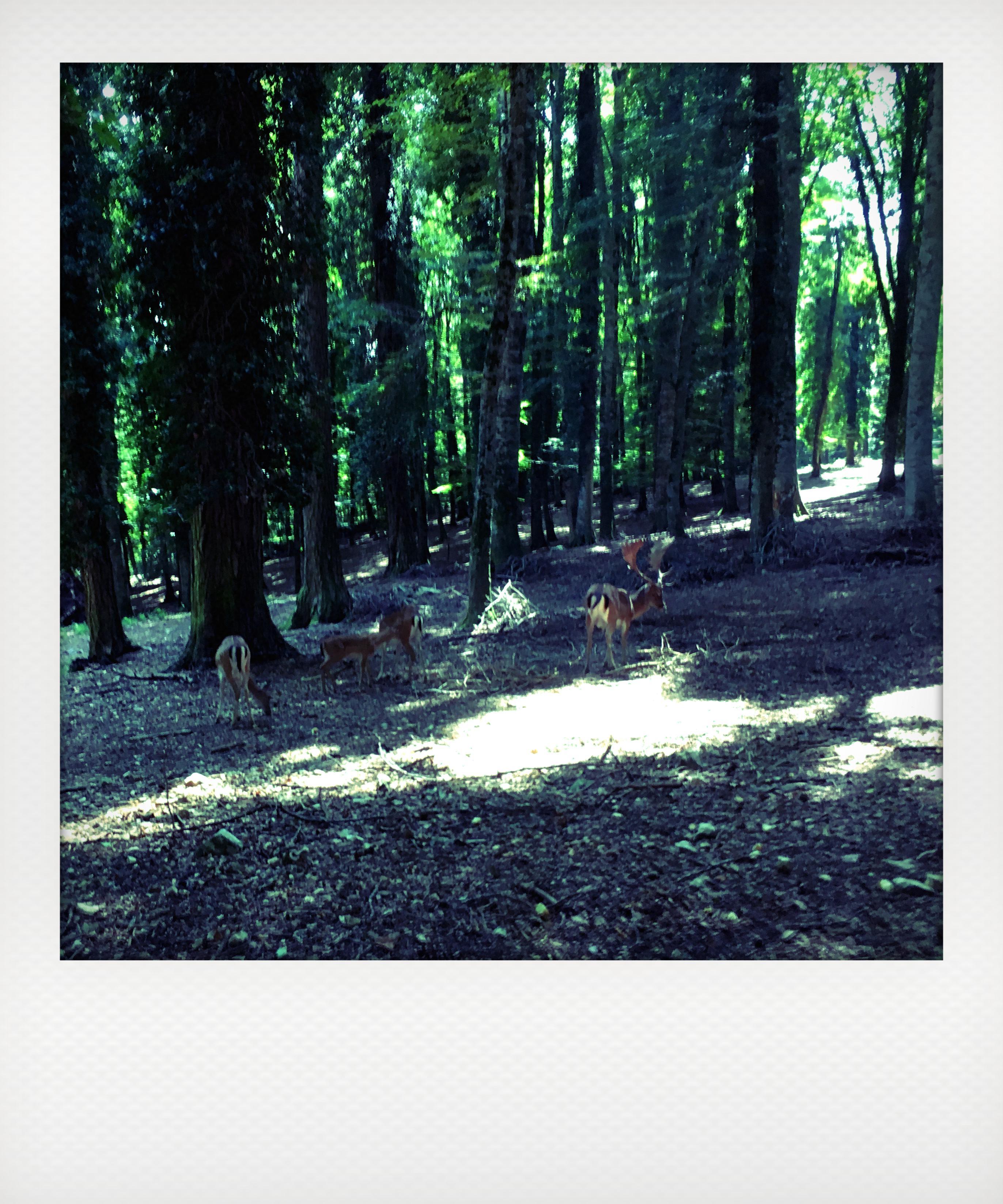 Cosa vedere nel Gargano: la foresta umbra