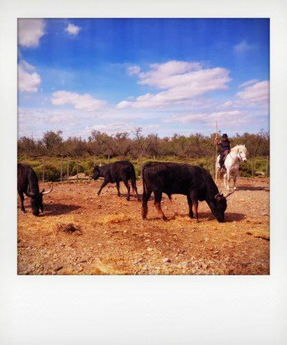 I tori neri del Sud della Francia
