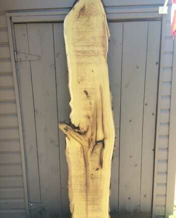 Main image - live edge mulberry slab 13 wide by 75 inches long
