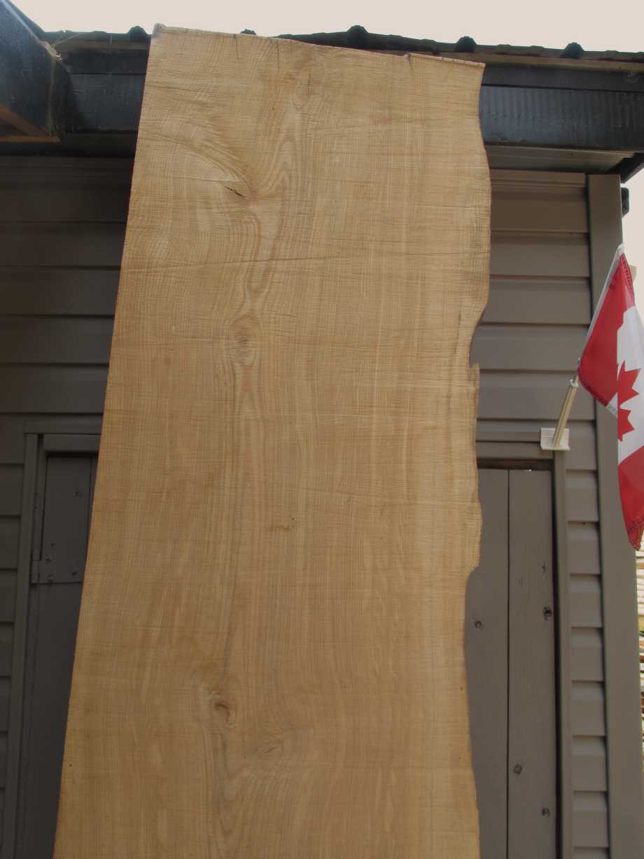 Closeup of grain top section - Ash wood live edge slab for sale 27 wide by 99 inches long
