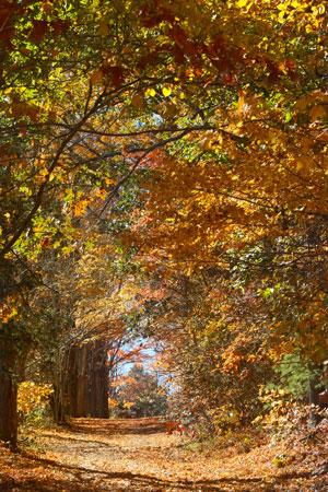 Beatiful Fall Foliage in Connecticut