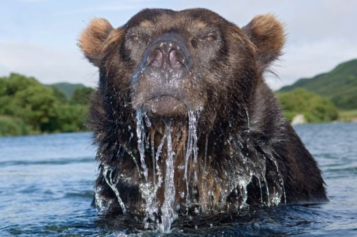 Russian Oil and Gas - Dunked Bear