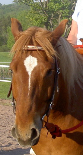 Oil and Gas Lingo horse head
