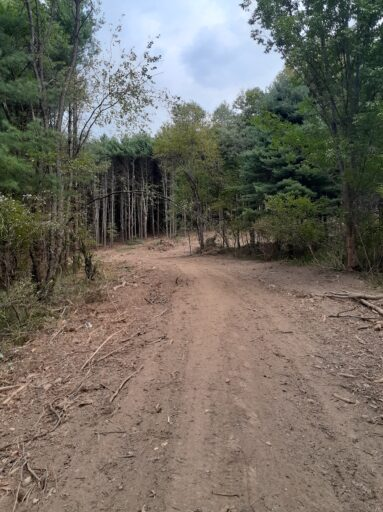 upstate forests