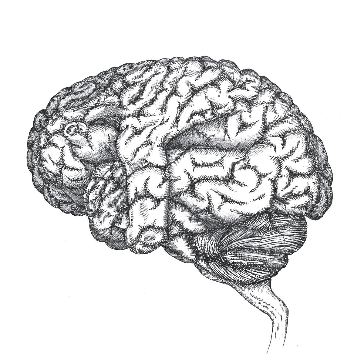 Fetal Brain illustration by Zach Johnson