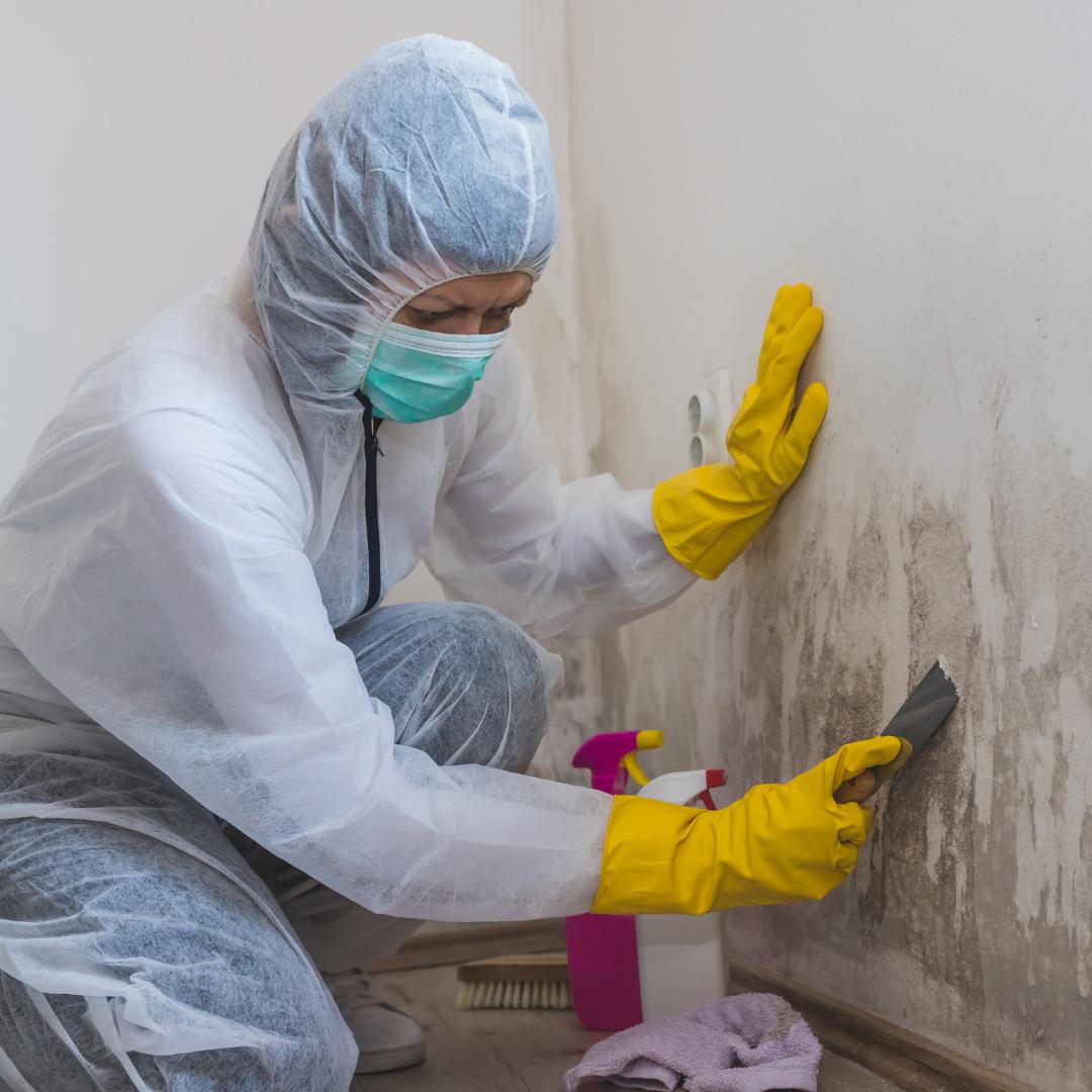 Mold Remediation VetCor of Brazos Valley
