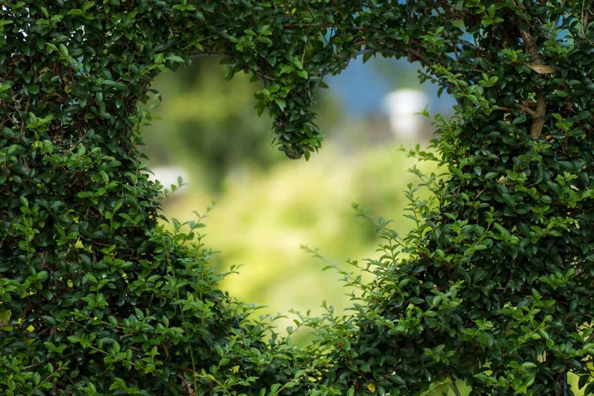 nature heart shape