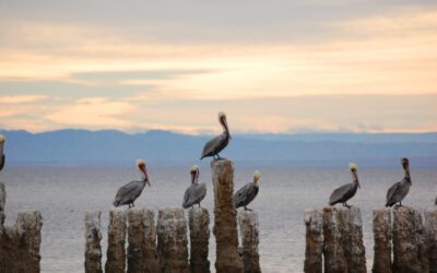 Construction Begins on Key Salton Sea Habitat and Air Quality Project