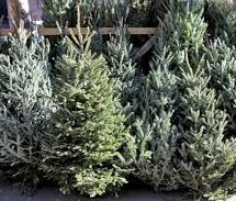 Xmas Trees and Wreaths
