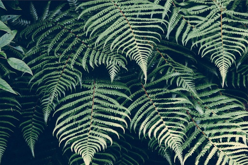 nature, plant, fern