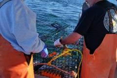 lobster_boat17