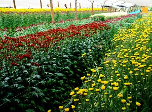 A PERFECT FLOWER ARRANGEMENT: THE U.S. & COLOMBIA