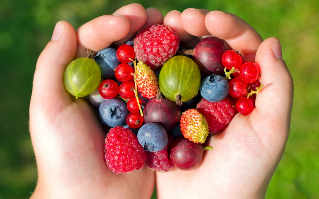 Summer berries: juicy, delicious and good for you