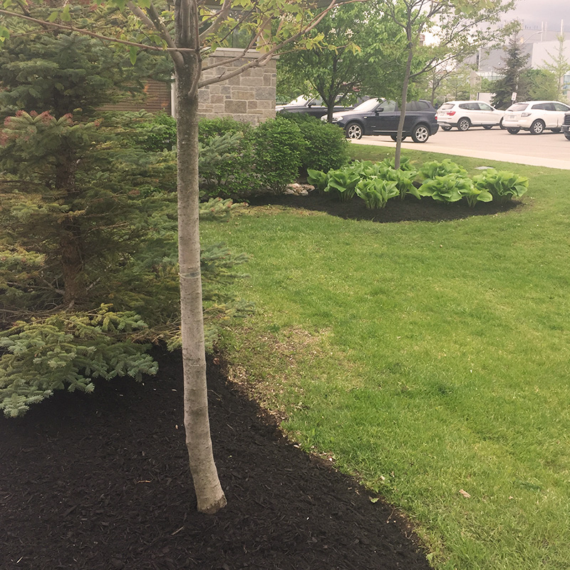 Mulch installation and landscaping