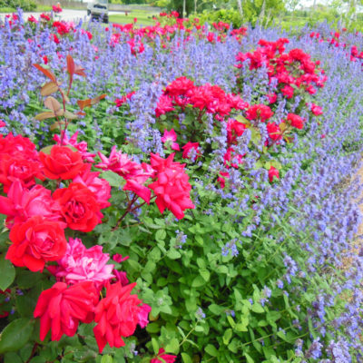 Friends and Flowers; A Relaxing Visit to the Chicago Botanic Garden Early Summer