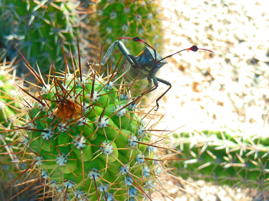Best photos - Huge bug in Tucson