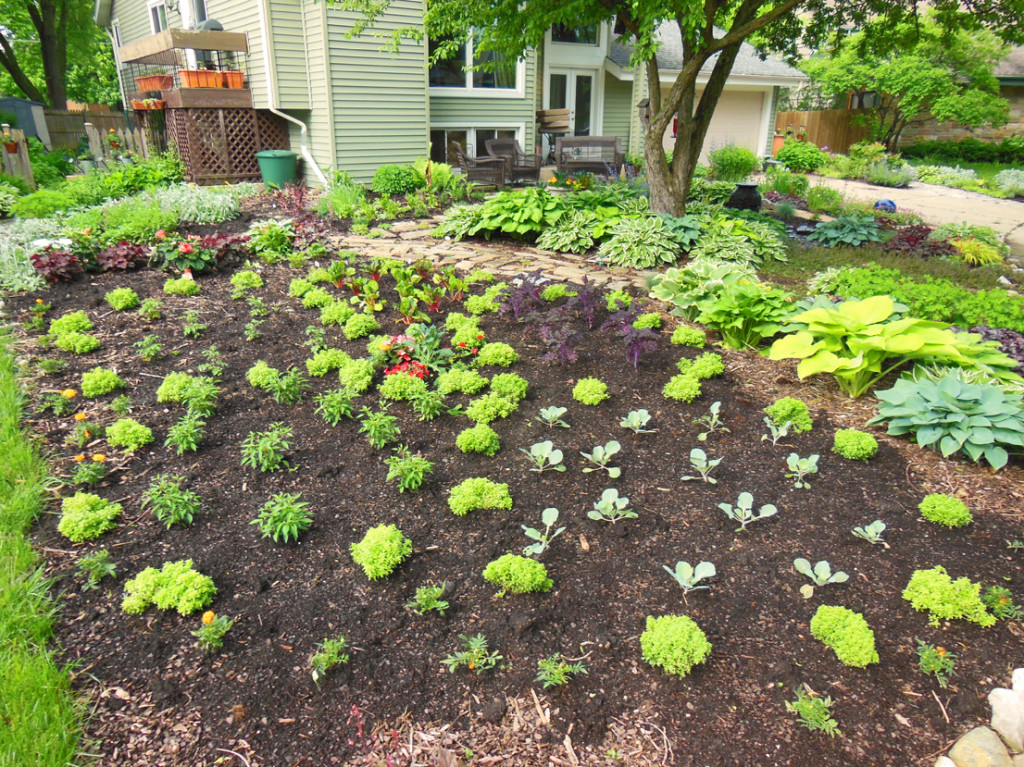 Front Lawn Vegetable Design - A Giant Flower just planted