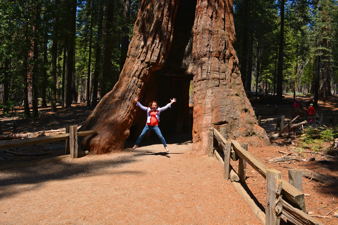 Happy Earth Day – Learn About Giant Sequoia Trees