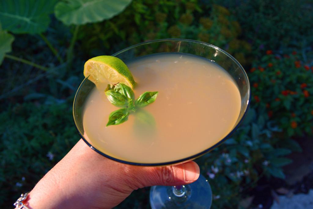 Basil Grapefruit Martini Cocktail Recipe
