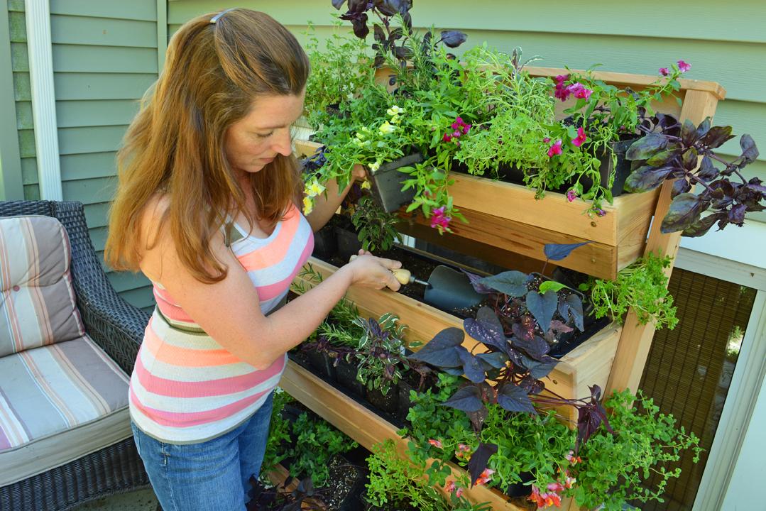 Grow Herbs in the Fall