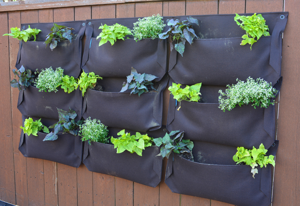 Money Saving Garden Woolly Pockets First Plants and Seeds