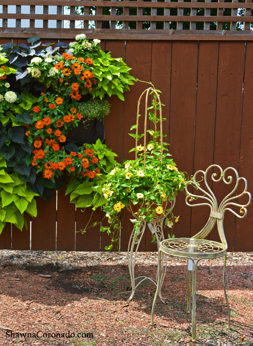 Living Wall with Sweet Potato Vine and Zinnia Photo © copyright