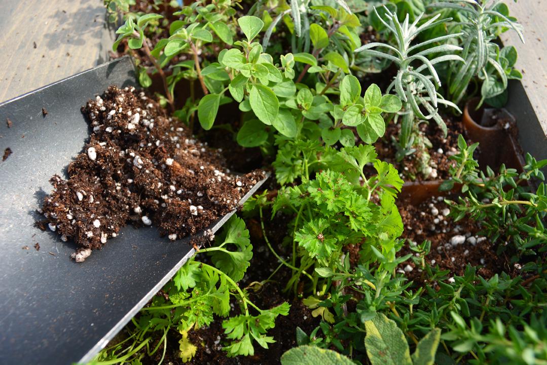 Aromatherapy Living Wall Grovert filling leftover soil