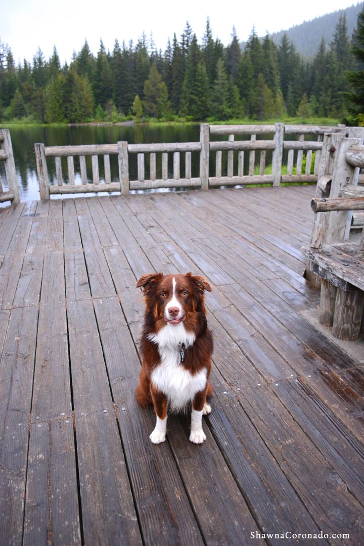 Dog at Lake Trillium on Mount Hood copyright Shawna Coronado